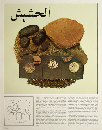 Connoisseur's Field Guide to 1960s Hashish and Marijuana Varieties Poster